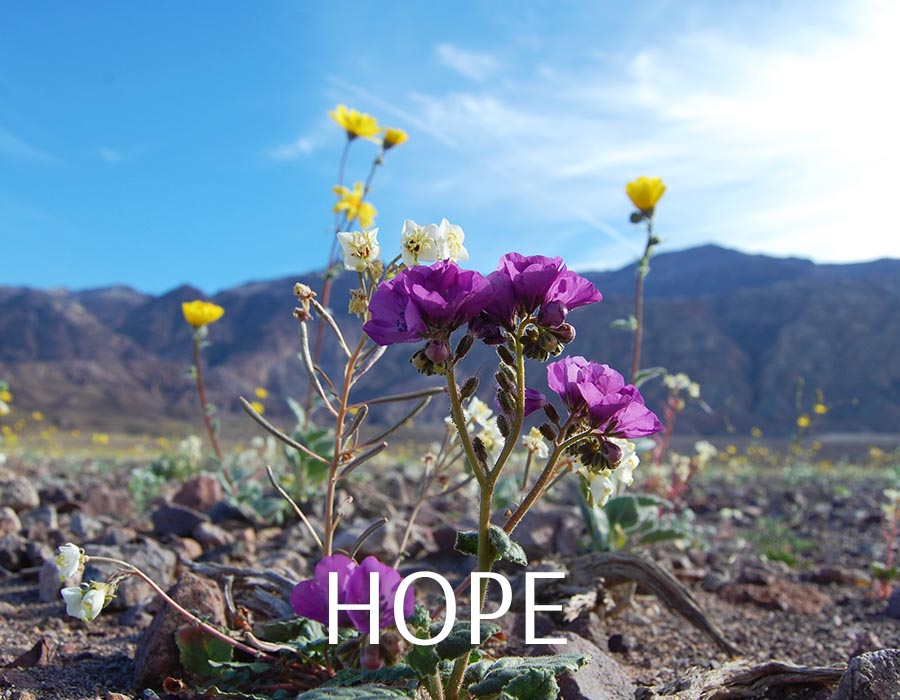 daily boost some hope